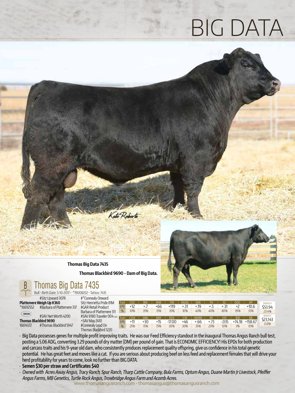 BIG DATA  Thomas Big Data 7435 Thomas Blackbird 9690 - Dam of Big Data.  B Thomas Big Data 7435  Bull     Birth Date  5-10...