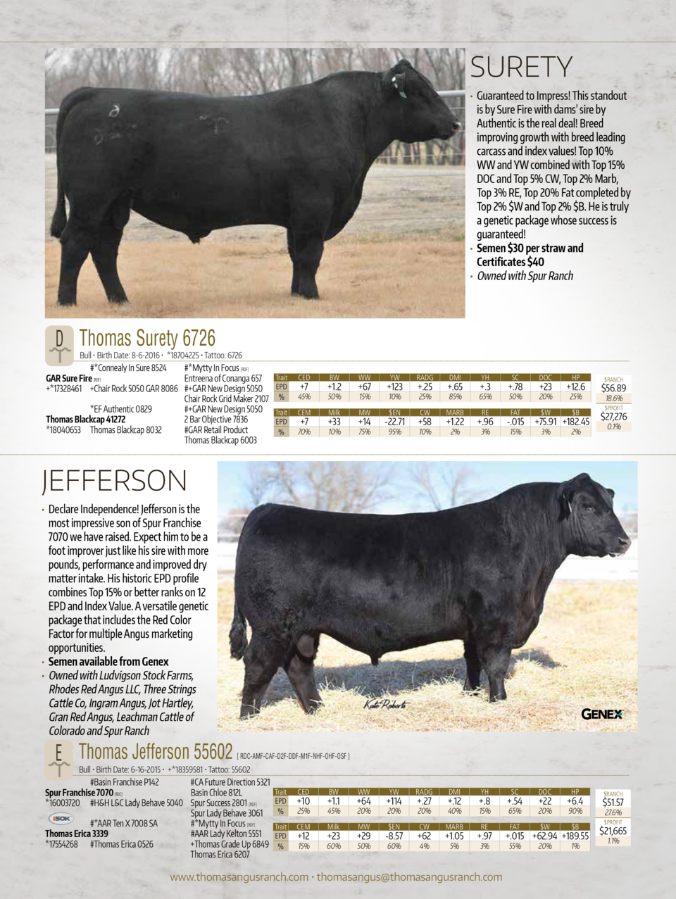 SURETY      Guaranteed to Impress  This standout  is by Sure Fire with dams    sire by Authentic is the real deal  Breed i...